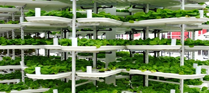 Eco friendly vertical farming: The new agriculture option for the future?
